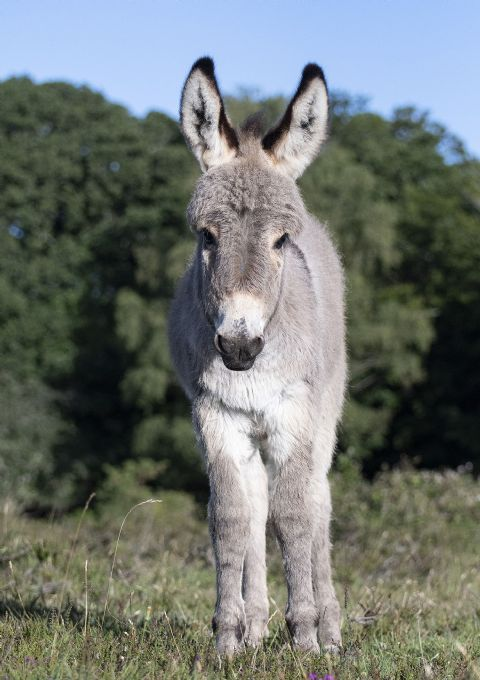 Early Morning Donkey Foal Greetings Card